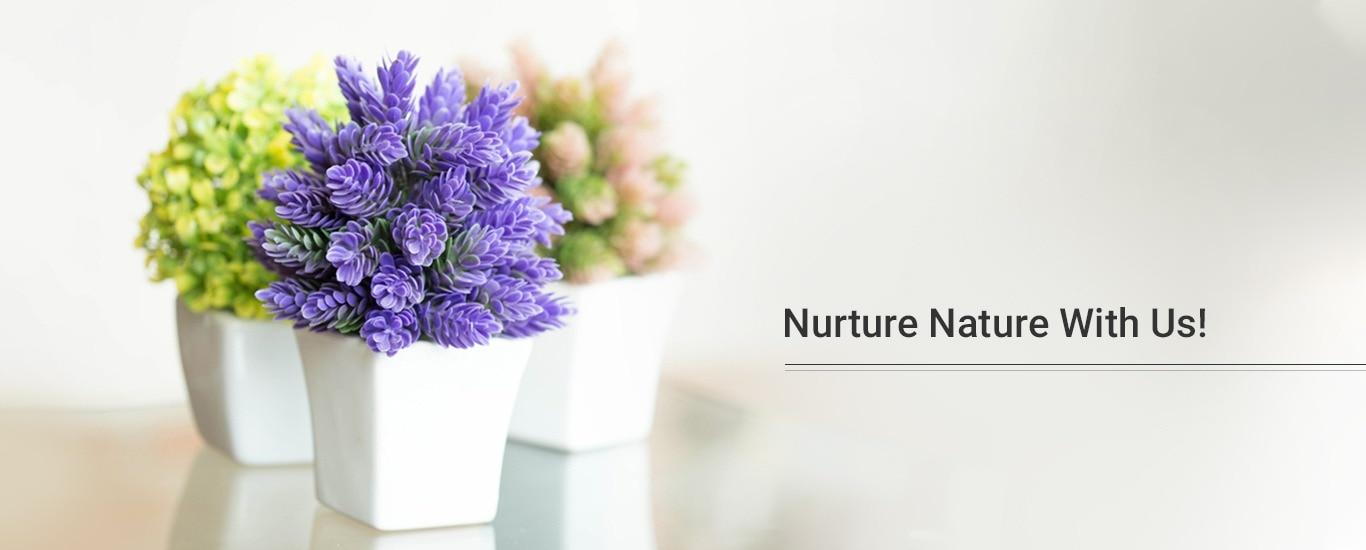 Indus Herbs - Plant Nursery and Landscape Contractor in Basavanagudi, Bangalore
