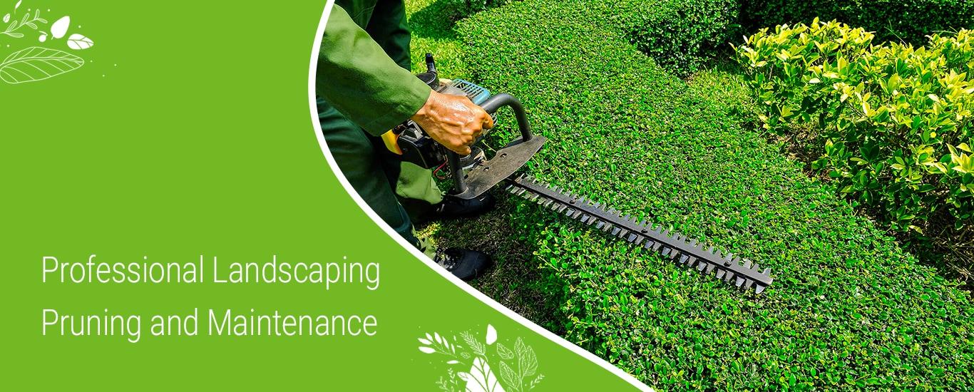 Sri Vinayaka Soft & Hardcore Landscaping ( Service & Maintainence ) - Landscape Contractor in Ramamurthy Nagar, Bangalore